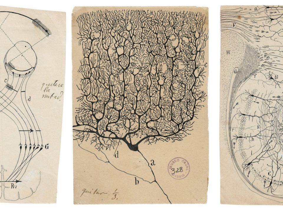 cajal y sus dibujos